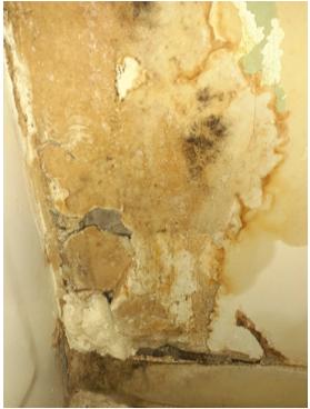 Yellow and black mold on crumbling drywayll